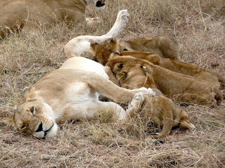 The Best Safaris in Kenya – 2020 update