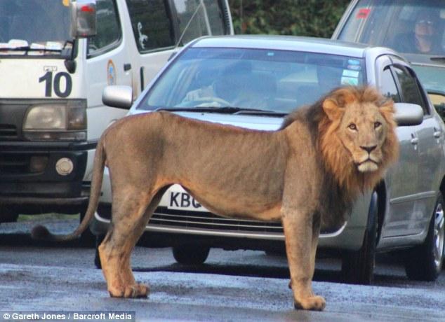 nairobi lions 3