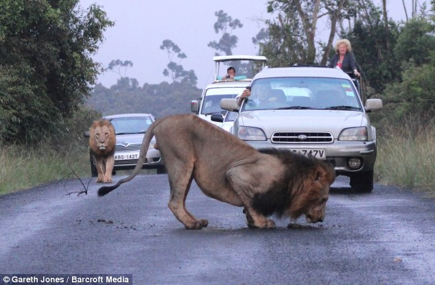 nairobi lions 4