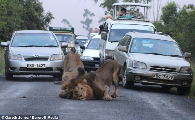 nairobi lions 5