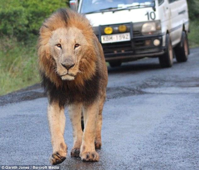 nairobi lions 7