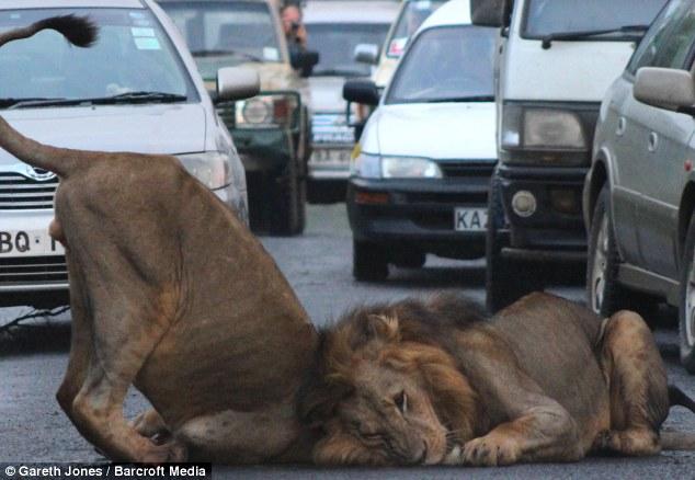 nairobi lions 8