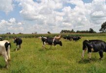 Agricultural Finance Corporation in Kenya