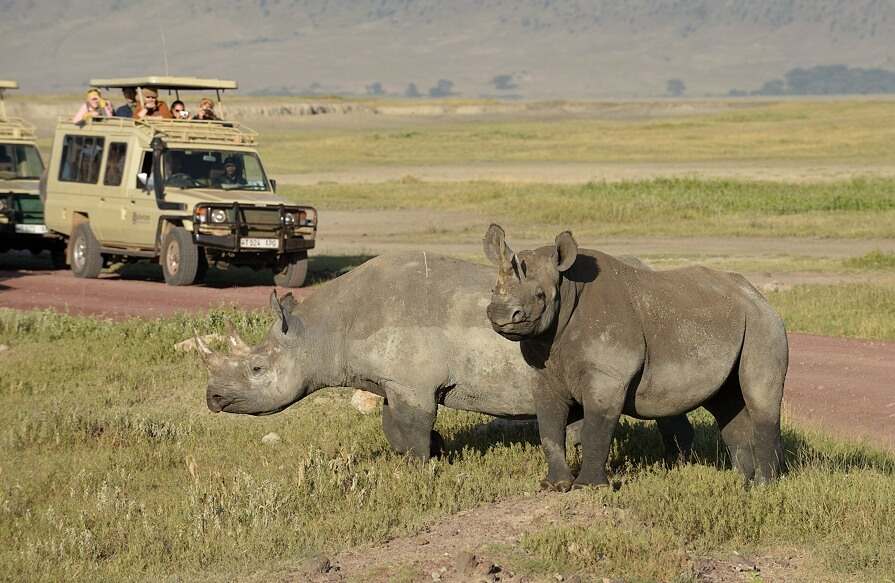 Popular Safari Animals You will see in Kenya