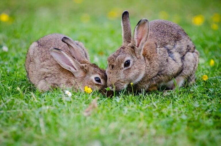 The Potential For Rabbit Farming in Kenya