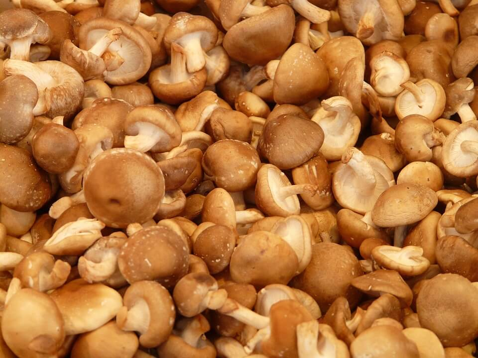 Mushroom Farming in Kenya in 2020