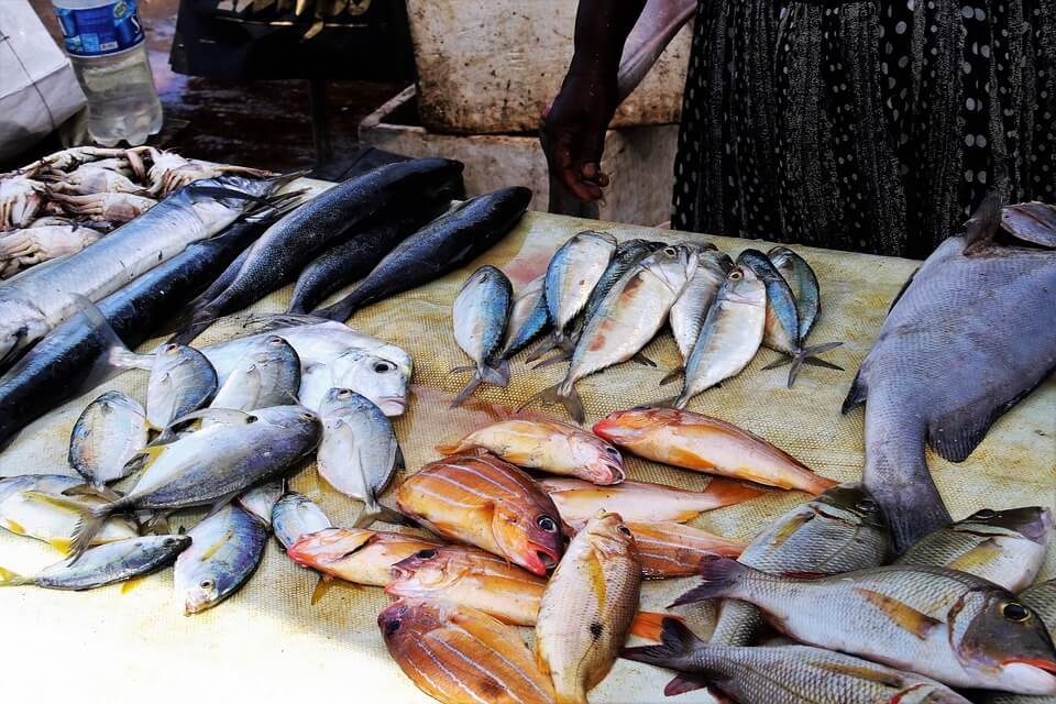 Fish farming in Kenya