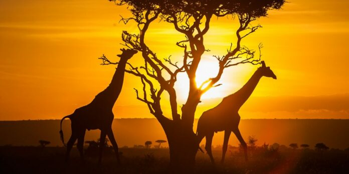 what is Kenya known for