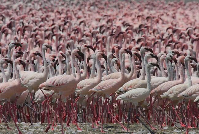 A Guided Bird Watching Safari Tour in Kenya and what to expect