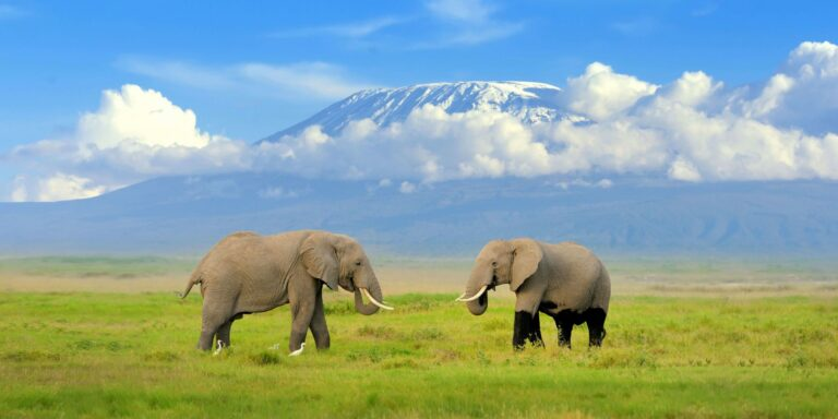 Guided Tour To Amboseli National Park in Kenya