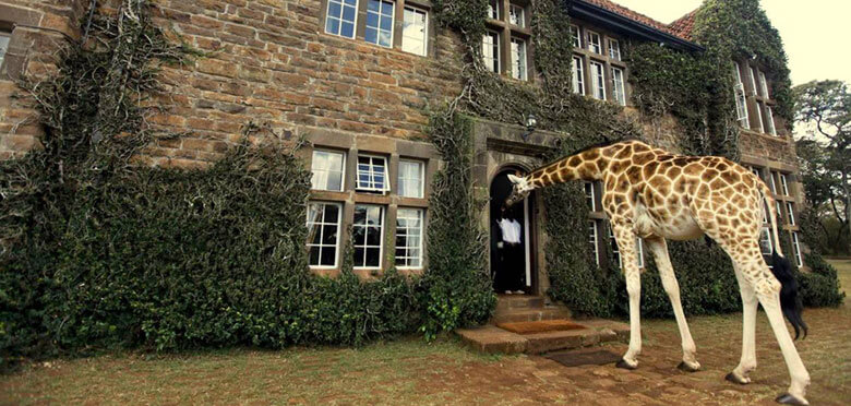 Kenya Safaris from Nairobi