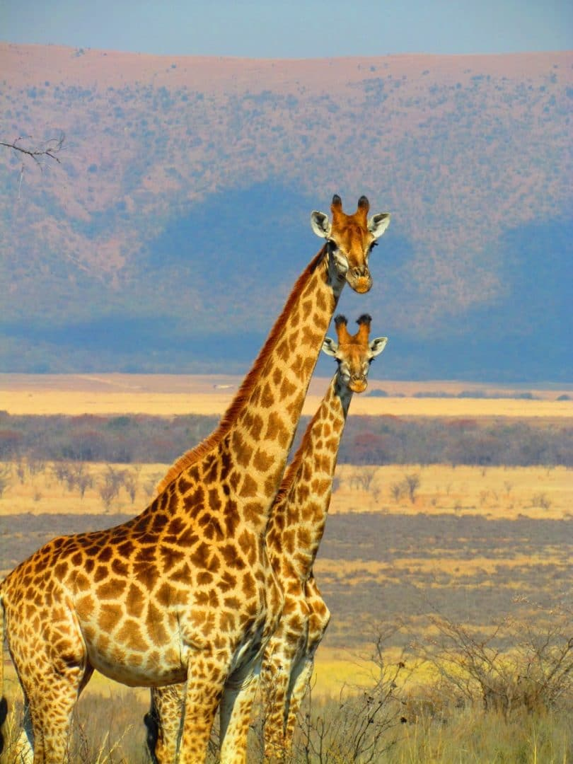 Best places to visit in Africa in 2019