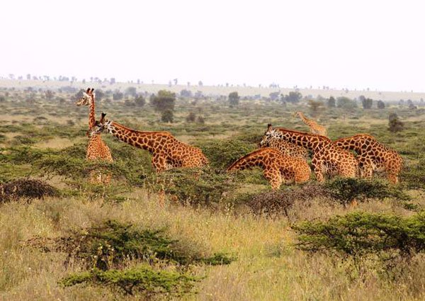Top Tourist Attractions in Kenya to Visit in 2020