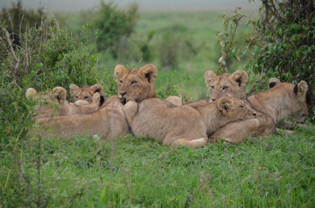 vaccinations in Kenya