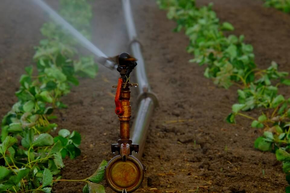 Sprinkler Irrigation in Kenya